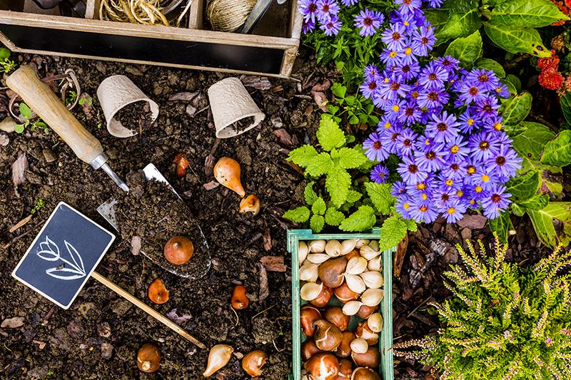 Bollen Bloeiend Voorjaar : Bloembollen kopen en zaden bestellen online of in ons tuincentrum